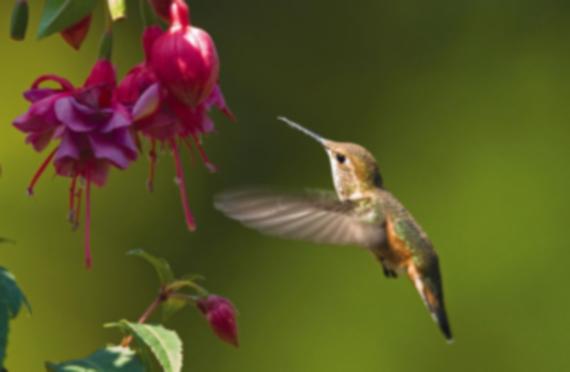 Hummingbirdpost