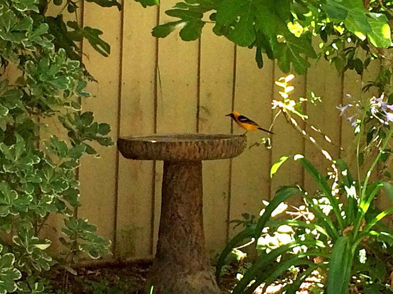 Birdbath with Billy Bird