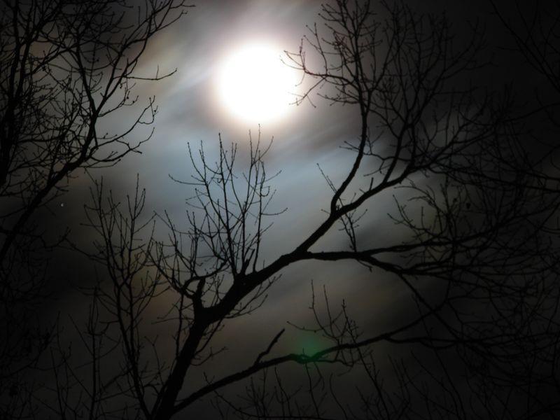 Moonlit-night-2