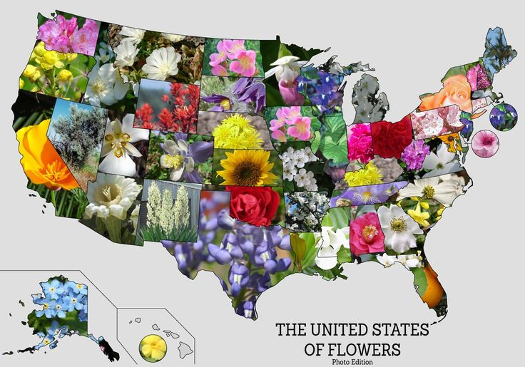 Flowers us