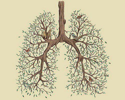 Pulmones-raices-respirar1